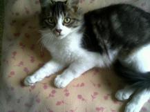 Meeko - the weekend he adopted me