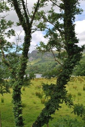 The surrounding landscape
